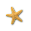 starfish transparent background copy_4