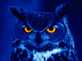 night_owl_11